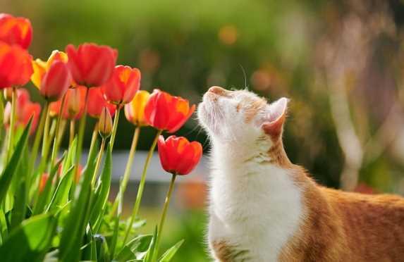 Слепой рыжий кот очаровал соцсети